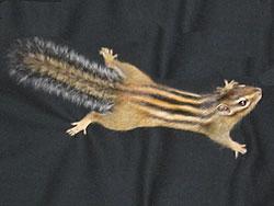 Streifenhörnchen: Schwanzhaare aufgeplustert