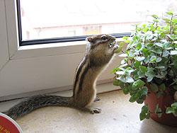 Hörnchen nascht am Golliwoog®