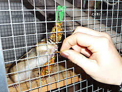 Streifenhörnchen wird mit einem Mehlwurm durchs Gitter gefüttert